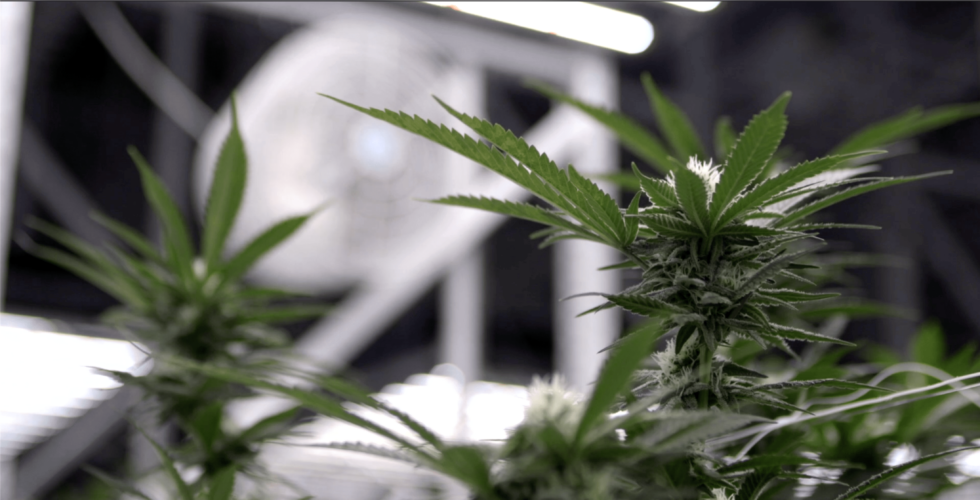 Title 24, Part 6, Energy Code Impacts on California Cannabis Cultivators