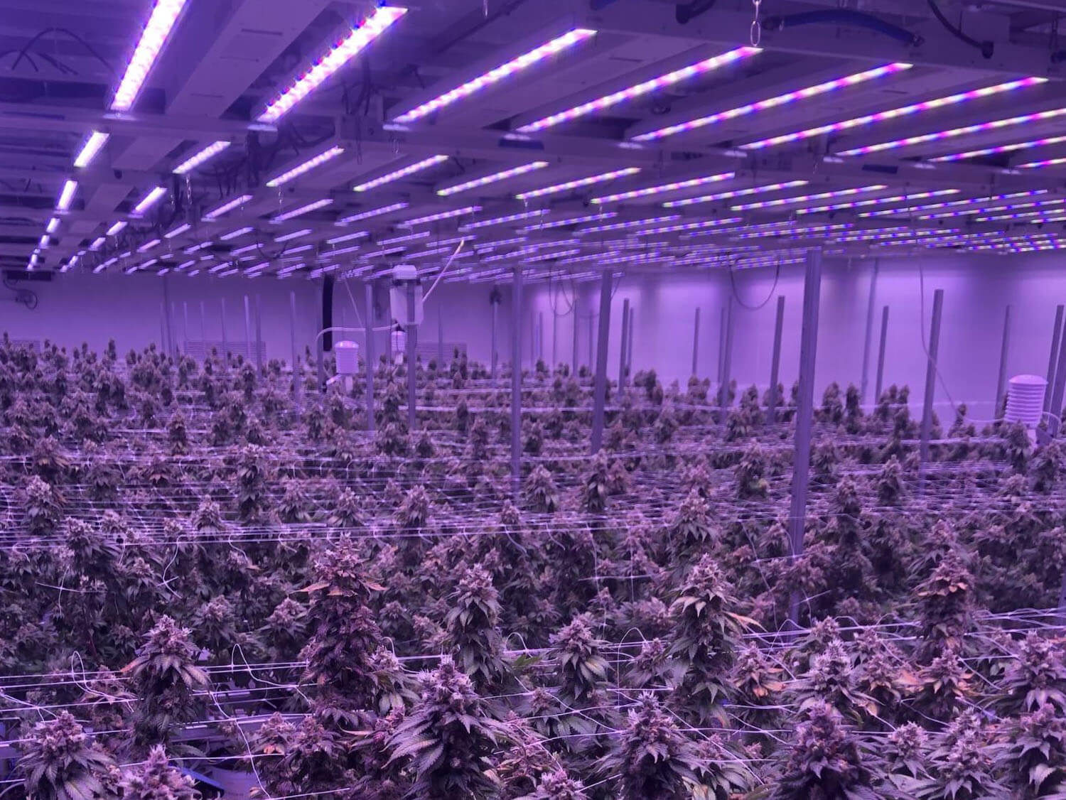 Study of Cannabis Energy Use Shows Indoor Cultivation Operations Using LED Lighting Demonstrate Better Efficiency