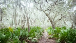 Cumberland Island Trail