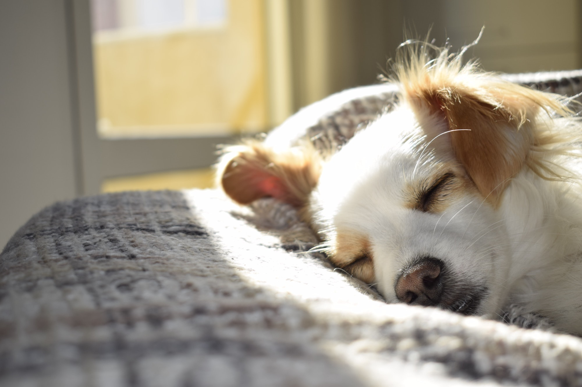 Thumb image for the post on Best Pet-Friendly Rehab for Your Cherished Pooch