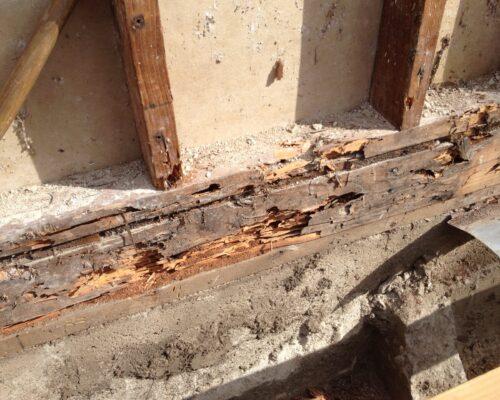 Termite damage 4