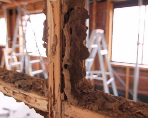 Termite damage1