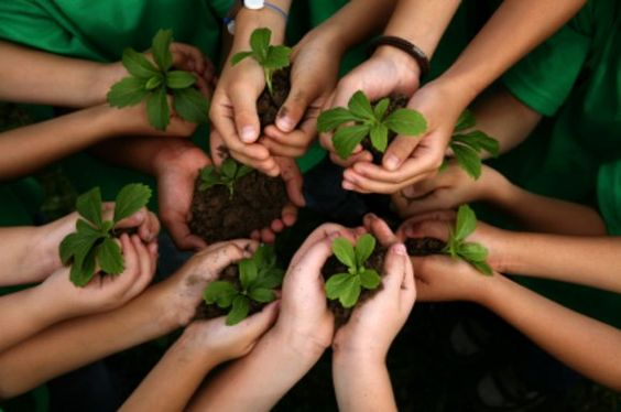 teach-green
