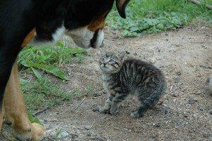 cat-245750_1280