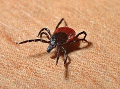 Lyme tick Treatment Natural Bagnell Chirorpactic Bucks county Langhorne Newtown Yardley PA 2016