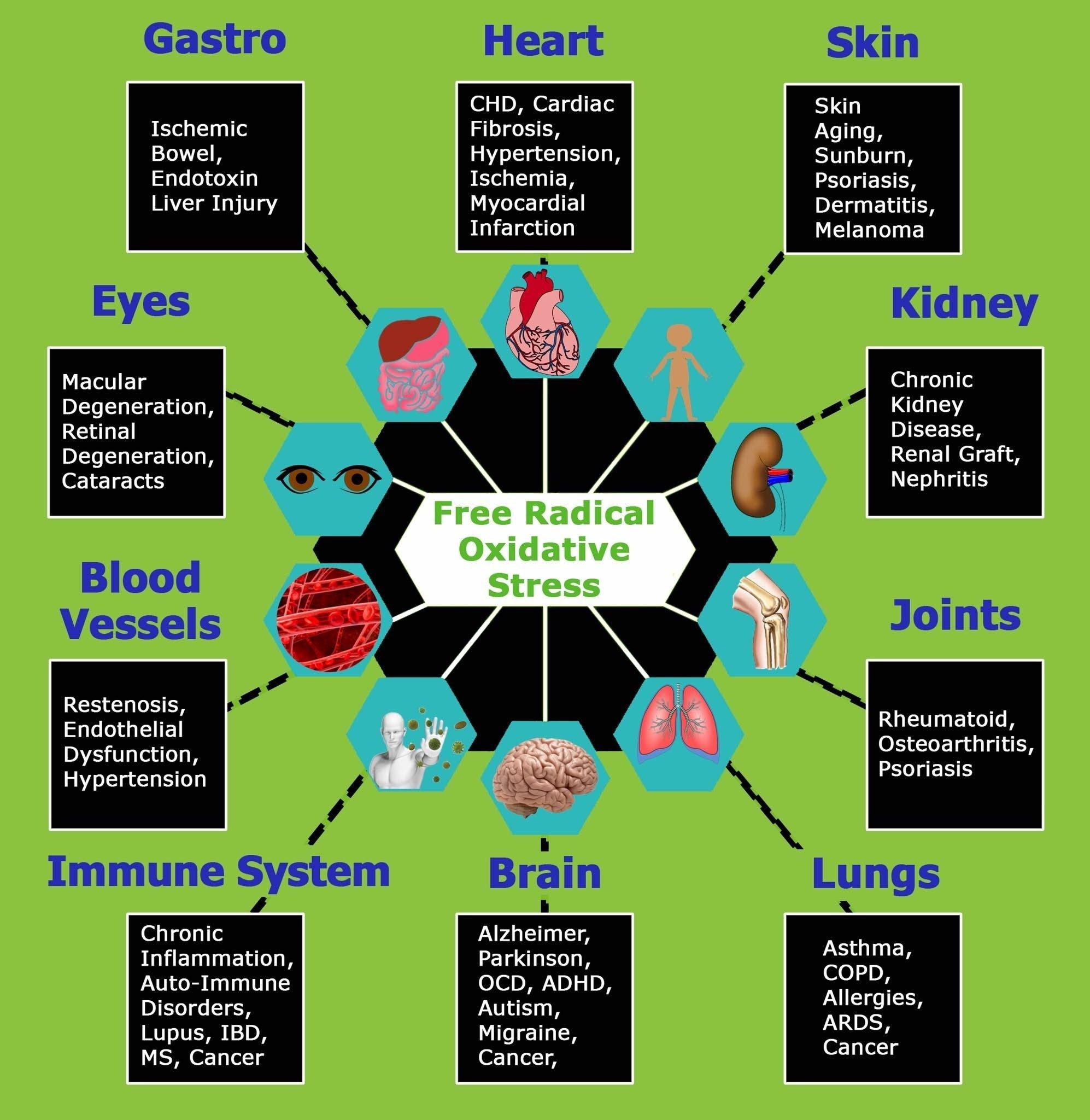 free radical oxidative stress