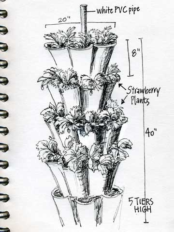 Pen & Ink Strawberry Condo by Janet Takahashi