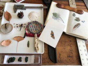 Janet Takahashi bug studies