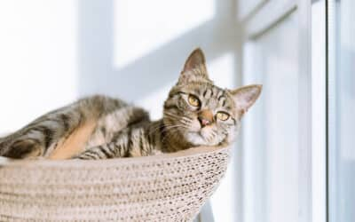 4 Ways to Care For Your Pet While Living in a Small Space