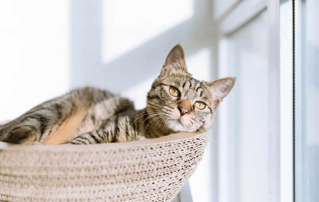 Cute kitten looking at the window
