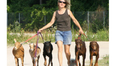 Photo of Lynne Swanson describes Safe Harbor Farm and its dog-friendly mission on Podcast 082