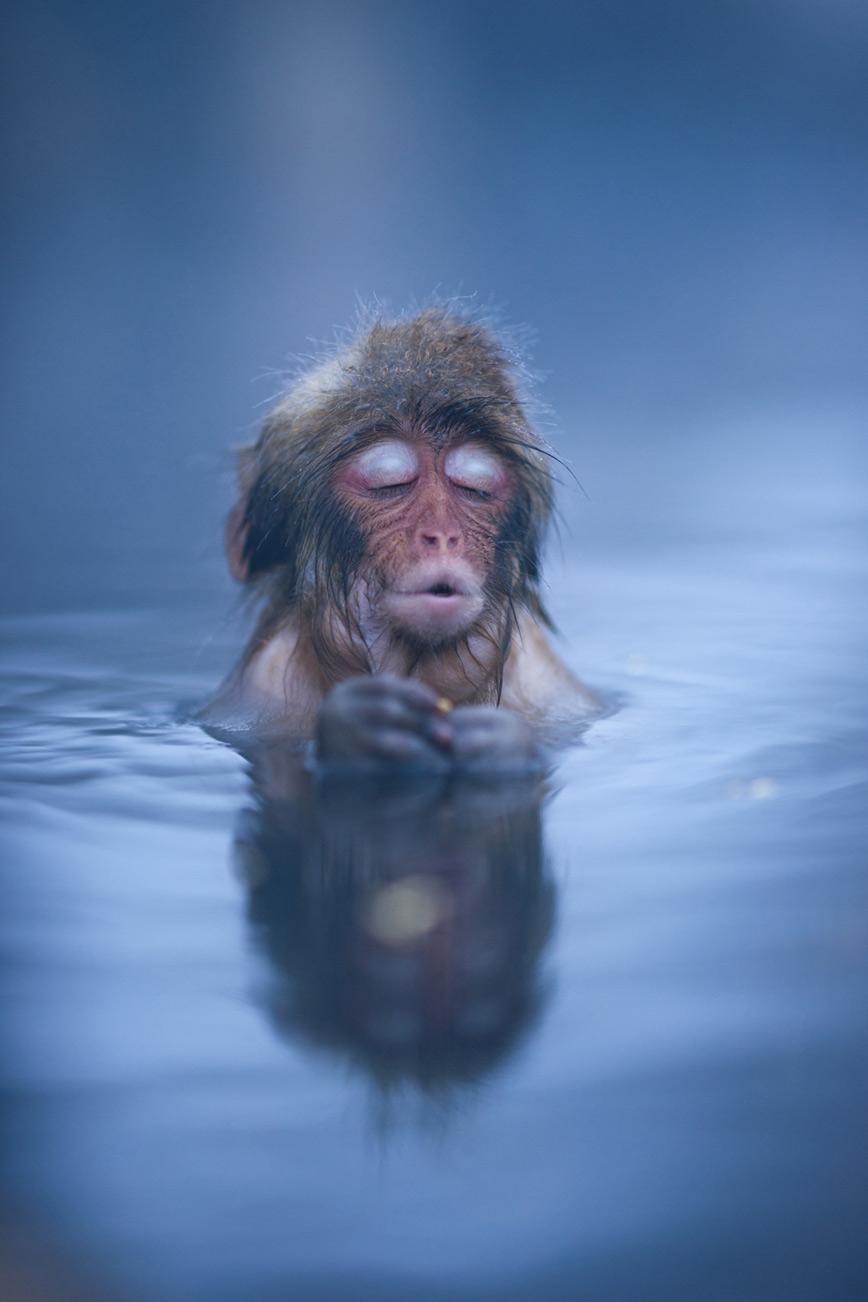 monkey-nagano