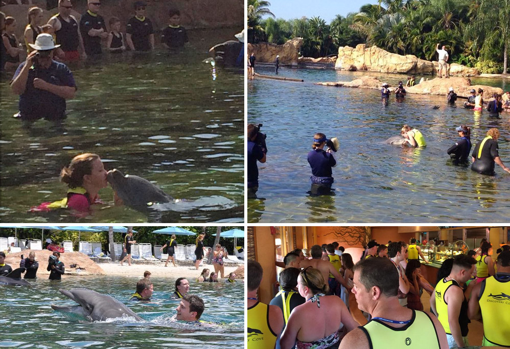 swim-with-the-dolphins-hell