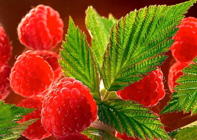 lighted-raspberries