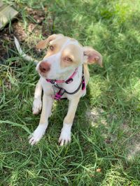 Piper-ADOPTED
