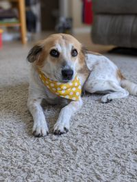 Tilly-ADOPTED