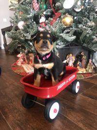 Jingle-ADOPTED