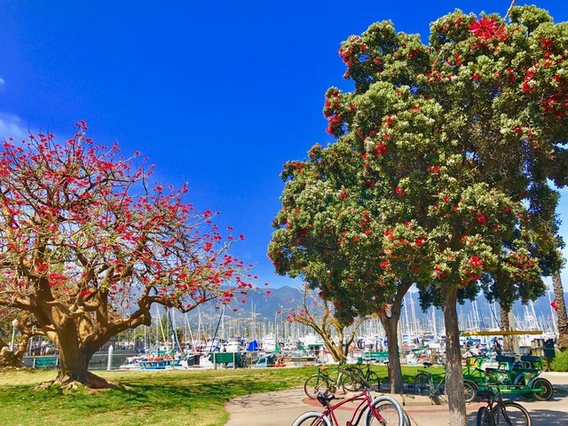 trees at the harbor