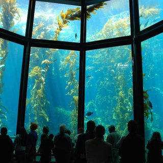 What's new at the Monterey Bay Aquarium?