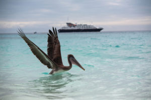 Silversea Expeditions - Visit the Most Remote Regions of Our Plane