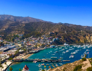 catalina island hillside