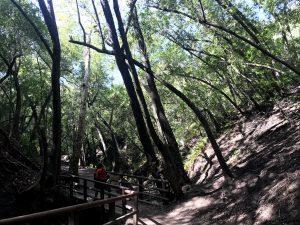 Nojouqi Falls Trail