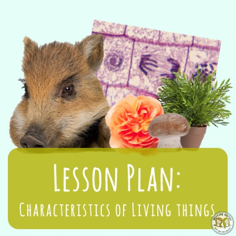 Lesson Plan: The Characteristics of Living Things