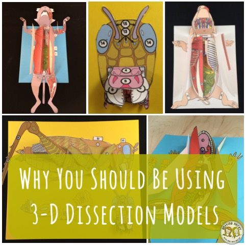 The Benefits of Paper 3D Dissection Models