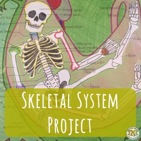 Lesson Plan: Skeletal System Project
