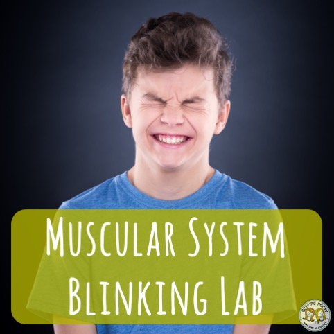 Lesson Plan: Muscular System Blinking Lab