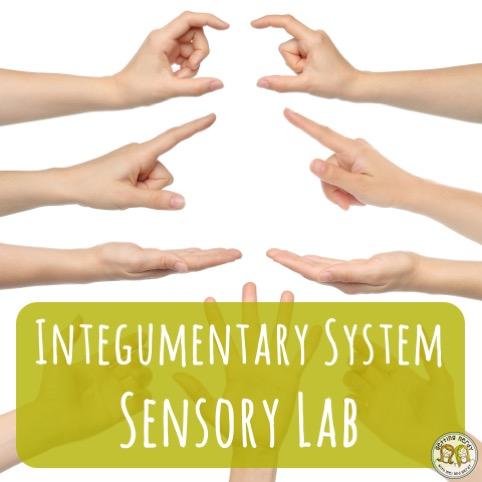 Lesson Plan: Integumentary System Sensory Lab