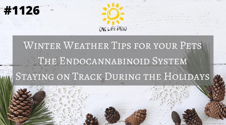 Endocannabinoid system