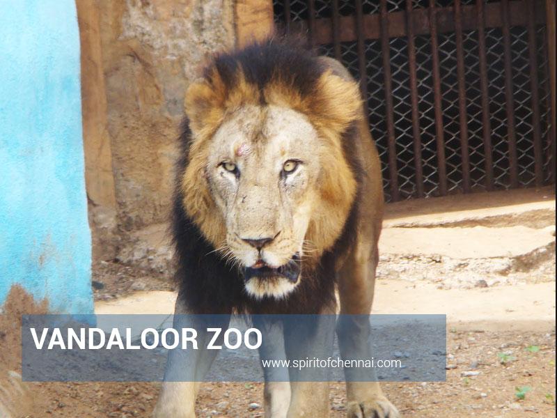 Buses to Vandaloor Zoo