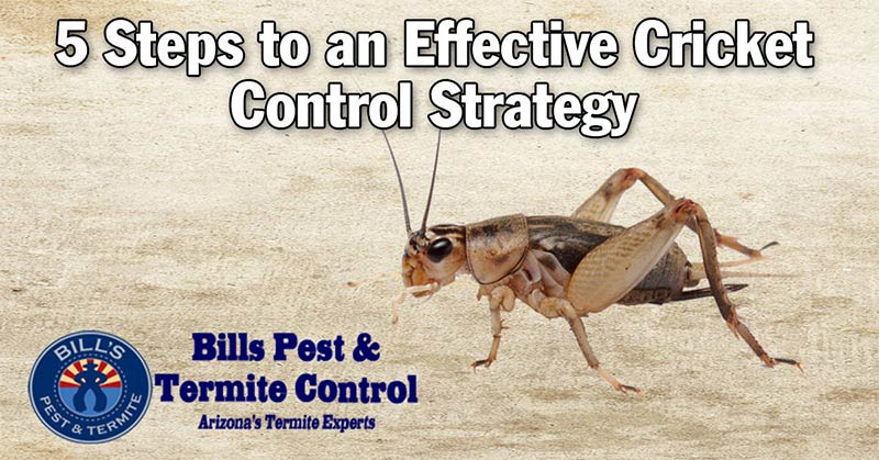 Cricket Control Strategy – 5 Effective Steps