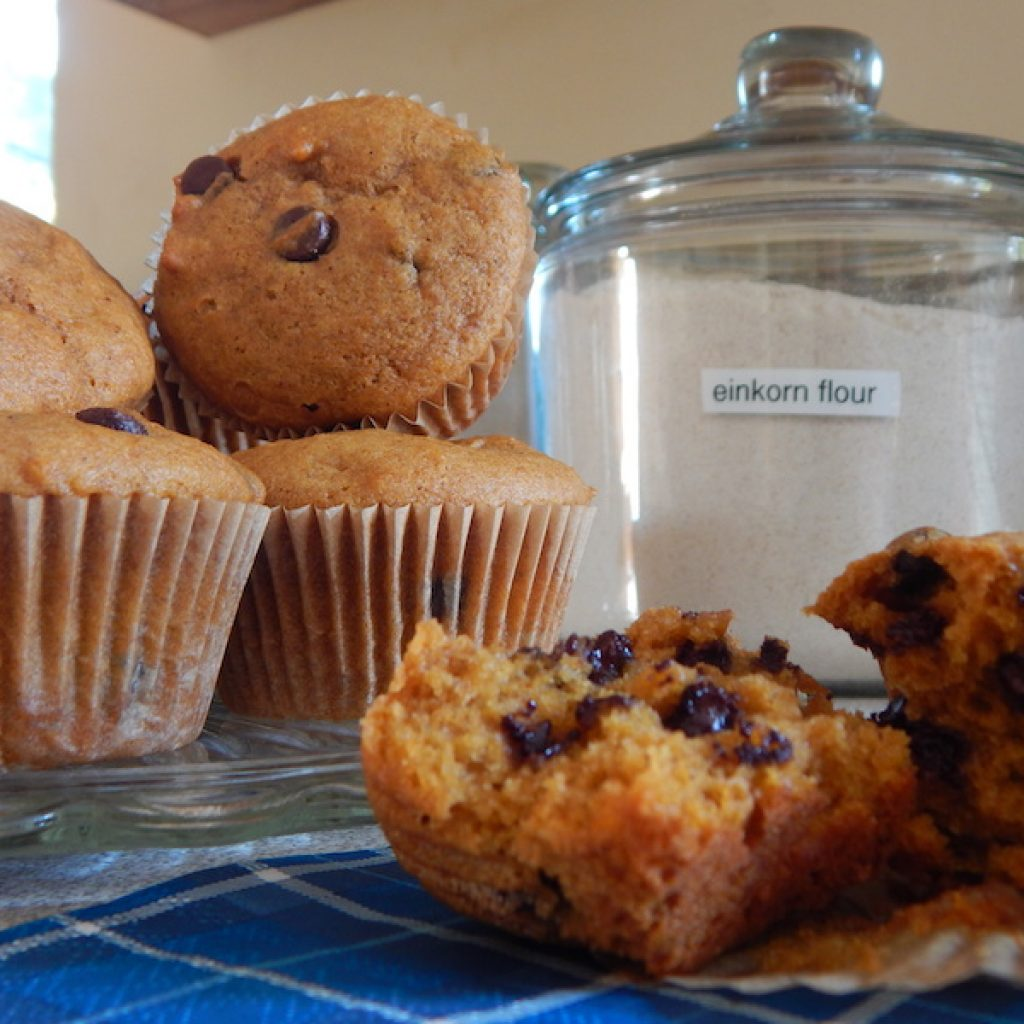 Pumpkin Chocolate Chip Einkorn Muffins | Anita's Organic Mill