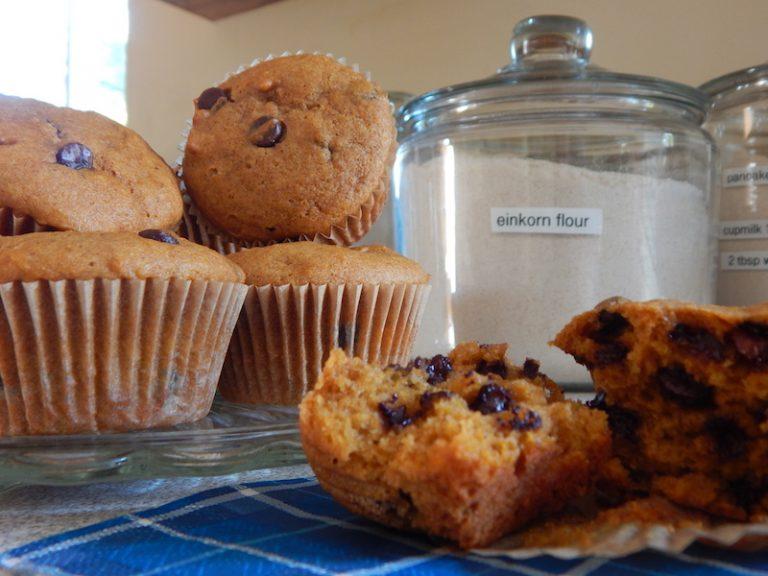 Pumpkin Chocolate Chip Einkorn Muffins | Anita's Organic Mill