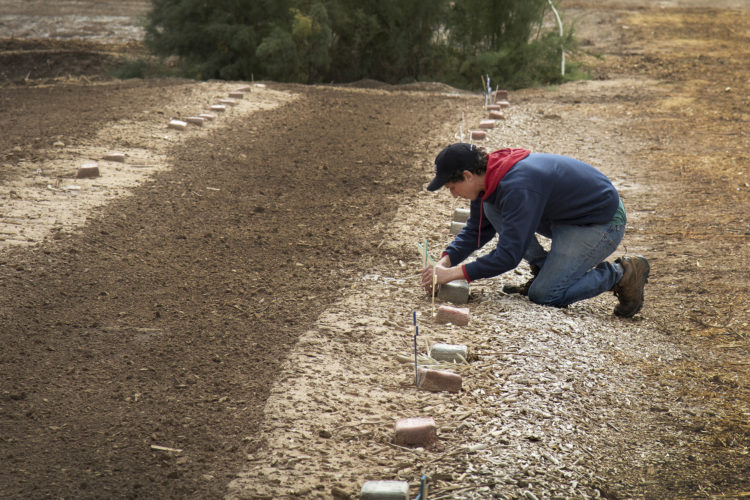 """HOLTVILLE, CA 03/10/2019:  Wes Markusfeld plants a wooden cross next to an unmarked grave at the """"Cemetery of the Forgotten,"""" where the remains of hundreds of unidentified immigrants are buried in a dirt lot behind the Terrace Park Cemetery in Holtville, CA."""