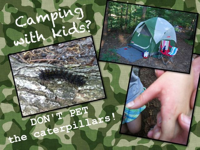 camping with kids? don't pet the caterpillars!