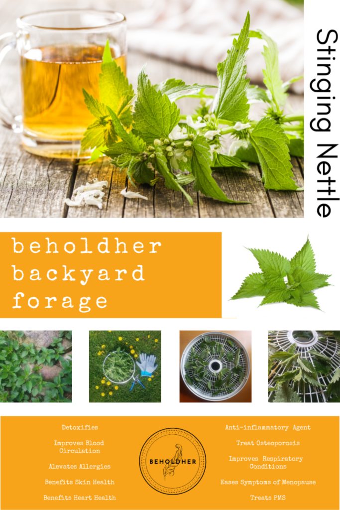 beholdher.life Pinterest fresh pin Backyard Forage Wild Edibles Nettle Tea