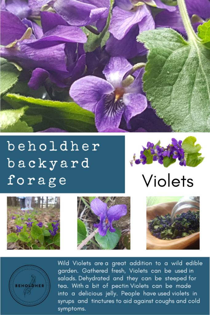 beholdher.life backyard forage wild edibles violets pinterest fresh pin