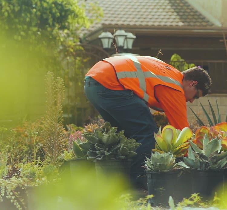 Landscaper tending to plants