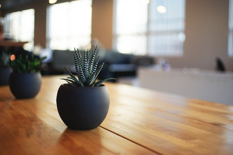 Plant on a desk