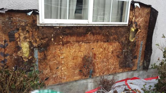 dry rot window