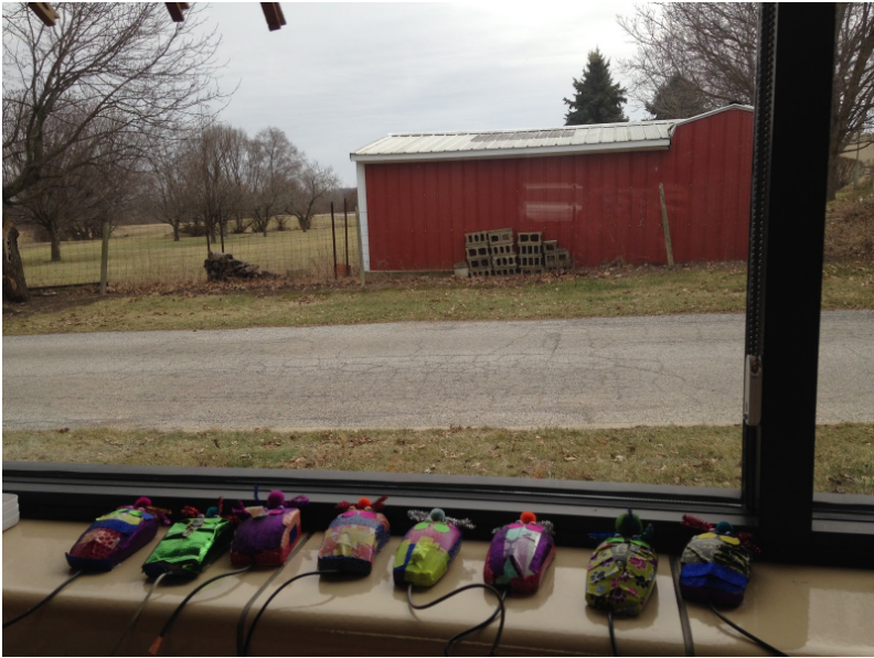Mice in window in Indiana