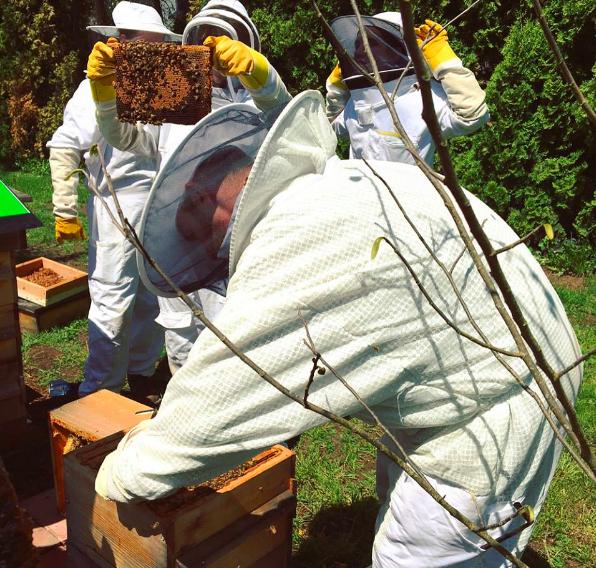 Andrew Bray demo of Beekeeping