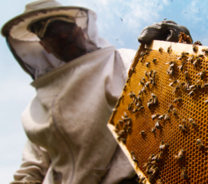 West Virginia Coal Miners to Beekeepers on Nationswell
