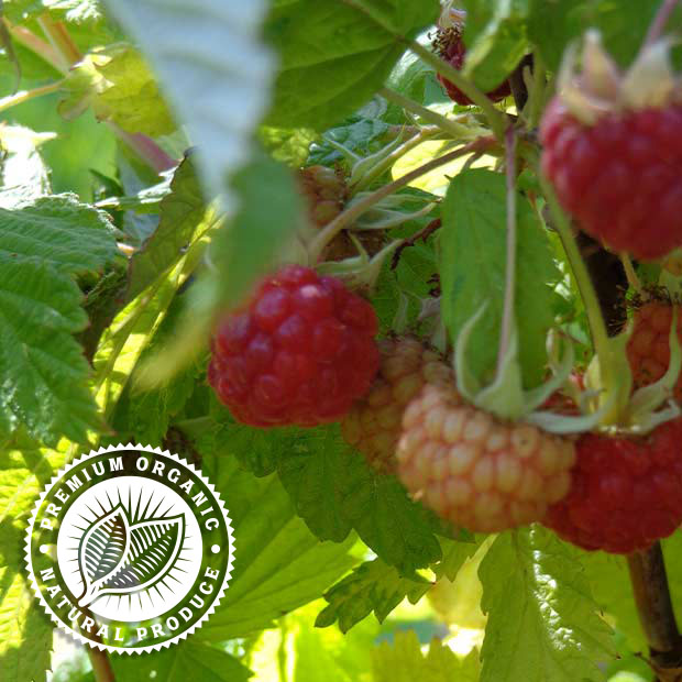 Fudge Factory Farm - Organic Farm Fresh Fruit
