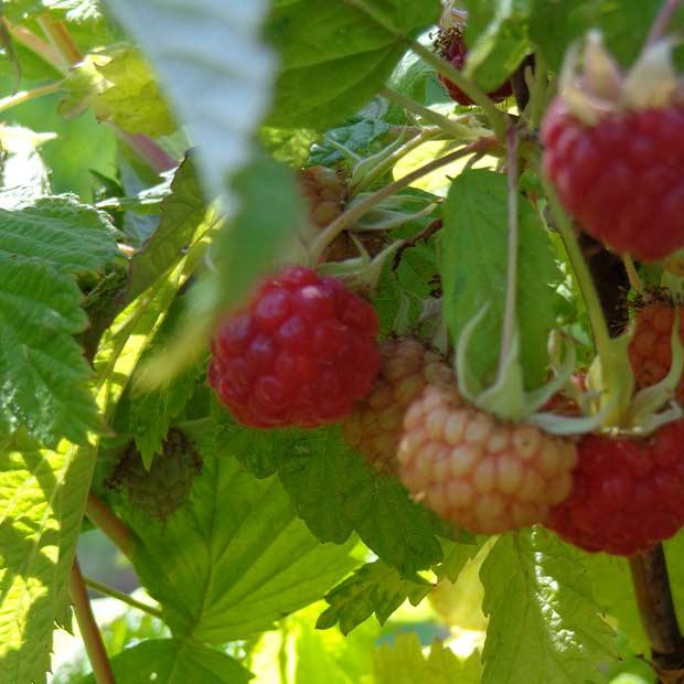 fudge-factory-farm-organic-fresh-fruit