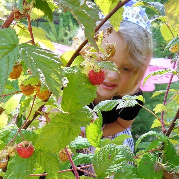 Fudge-Factory-Farm-Organic-farm-fresh-fruit
