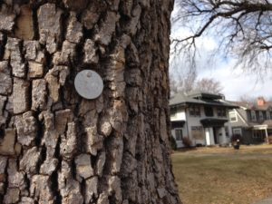 ash tree with tag on it